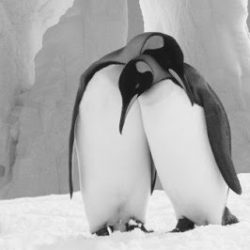 El abrazo del pingüino